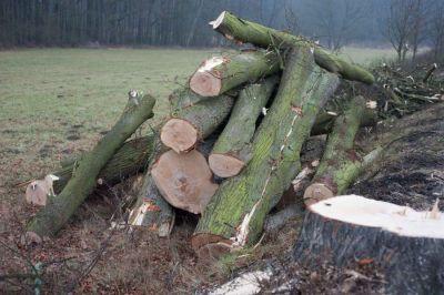 Zpomalme na silnicích. Zachráníme stromy i lidské životy